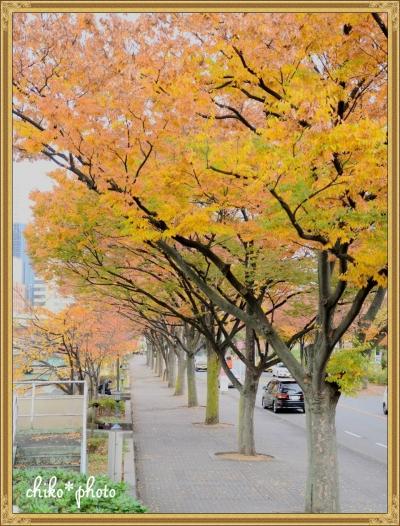 photo-585 大阪 街フォト_イチョウ並木1_1