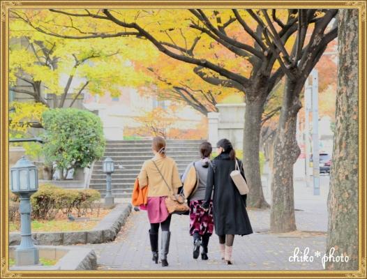 photo-585 大阪 街フォト_イチョウ並木1_2