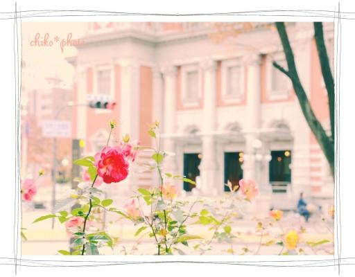 photo-588 大阪 街フォト_中之島バラ園1_1