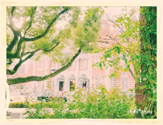 photo-587 大阪 街フォト_中之島バラ園1_1_1
