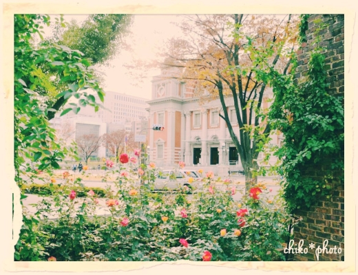 photo-587 大阪 街フォト_中之島バラ園1_2_1
