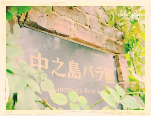 photo-587 大阪 街フォト_中之島バラ園1_3_1