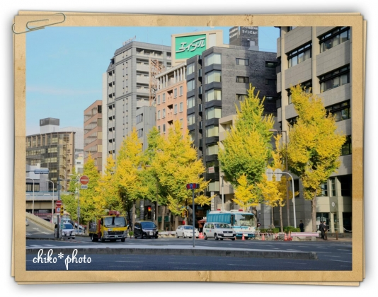 photo-588 大阪 街フォト_イチョウ並木1_1