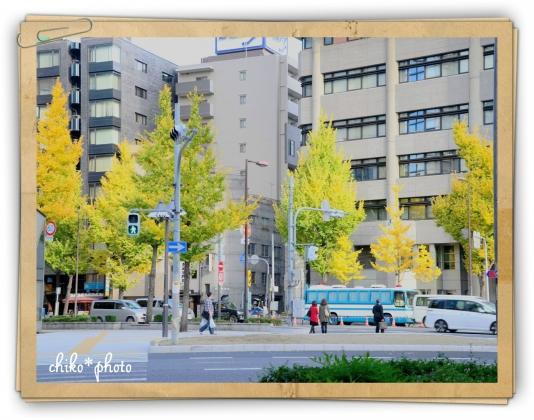photo-588 大阪 街フォト_イチョウ並木1_2