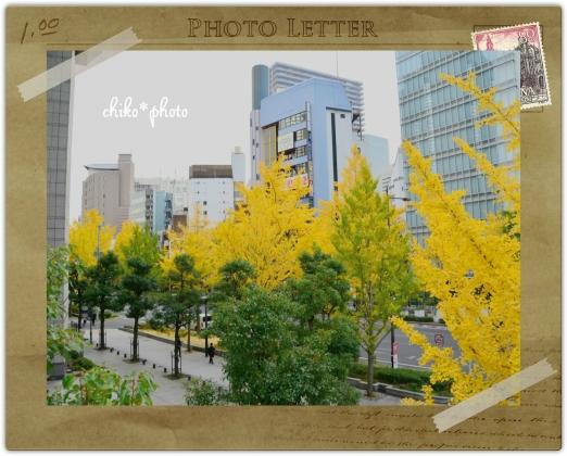 photo-589 大阪 街フォト_イチョウ並木2_3
