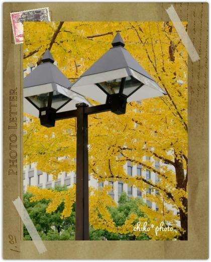 photo-589 大阪 街フォト_イチョウ並木2_2