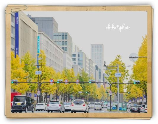 photo-592 大阪 街フォト_イチョウ並木3_3