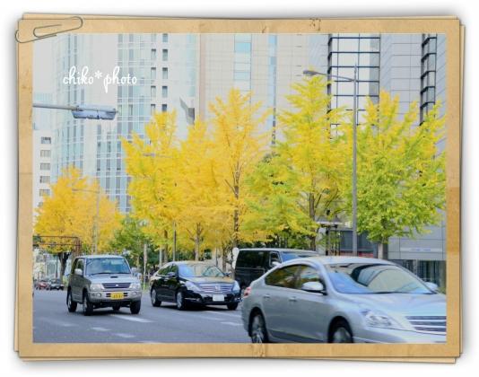 photo-592 大阪 街フォト_イチョウ並木3_1