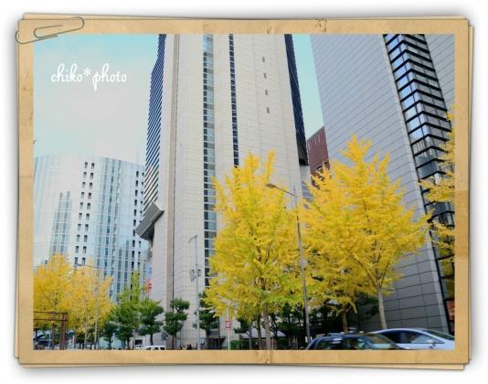 photo-592 大阪 街フォト_イチョウ並木3_2