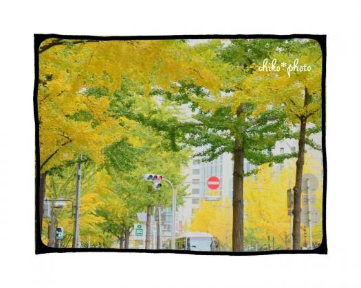 photo-593 大阪 街フォト_イチョウ並木4_2