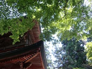 比叡山ヒルクライム120527c