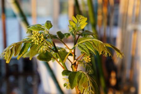 curry_leaf.jpg
