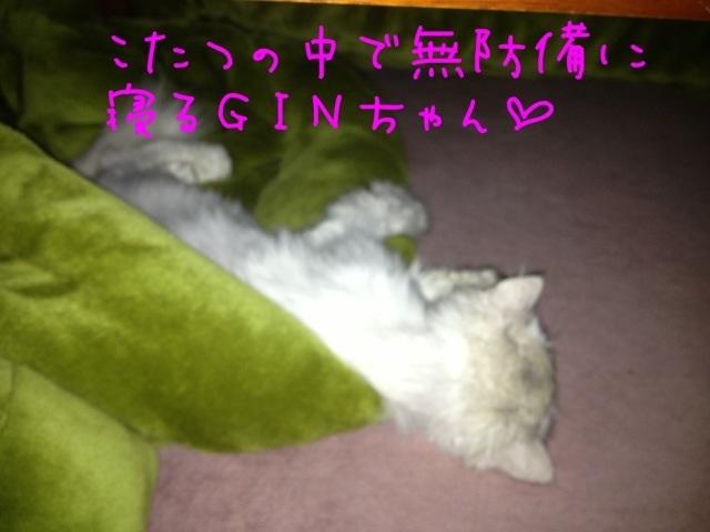 IMG_9286.jpg