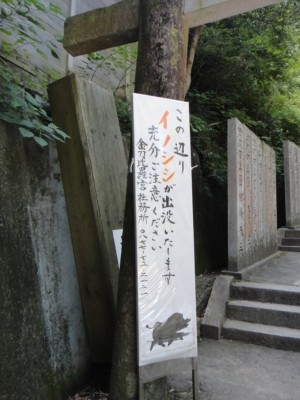 kagawa13.jpg