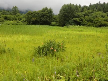 6姫川湿原風景
