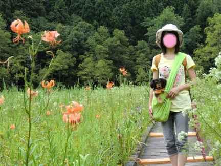 4姫川湿原木道