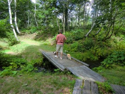 池への木道