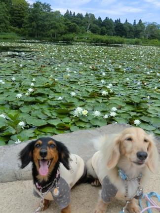 いもり池でチップとマリン