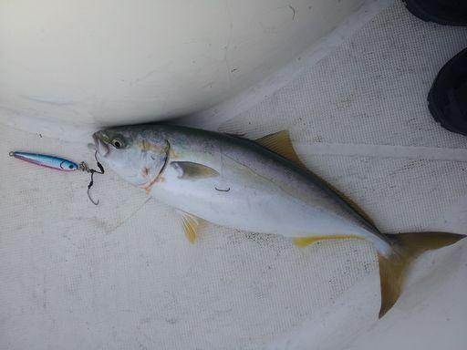 釣り③20131104