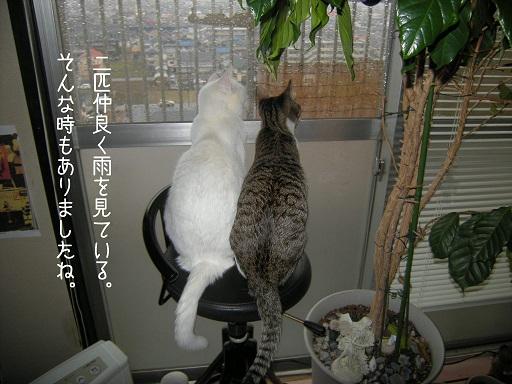 雨を見る二匹ぷち