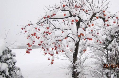 着雪で花が咲く