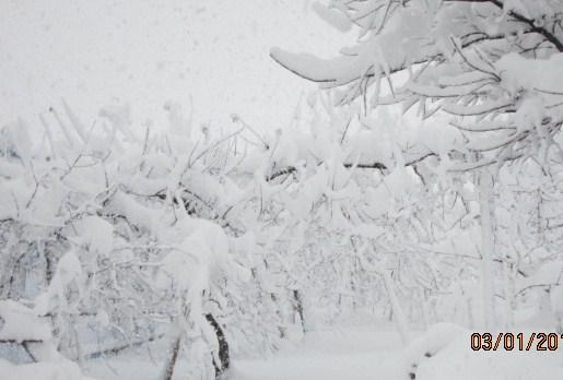 大雪だぞー