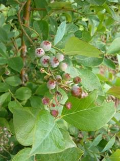 果物 (2)
