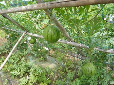 果物 (3)