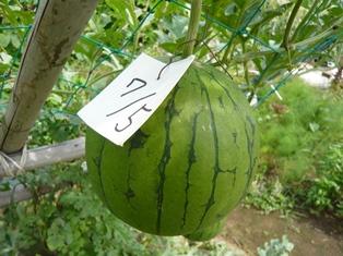 果物 (4)