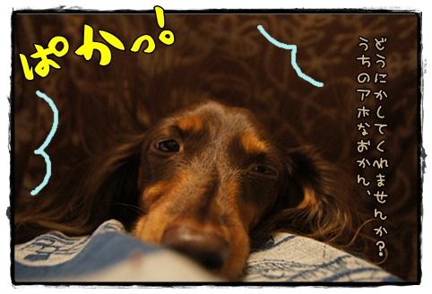 049_20121111101036.jpg
