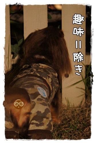 075_20121002235236.jpg