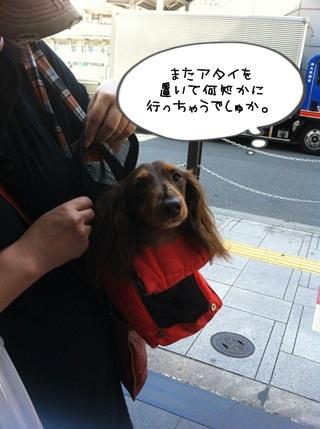 IMG_6835.jpg