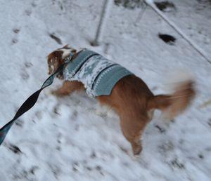 002雪散歩