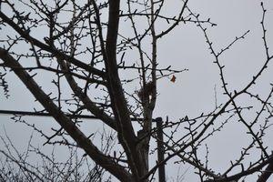 004鳥の巣1