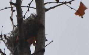004鳥の巣2