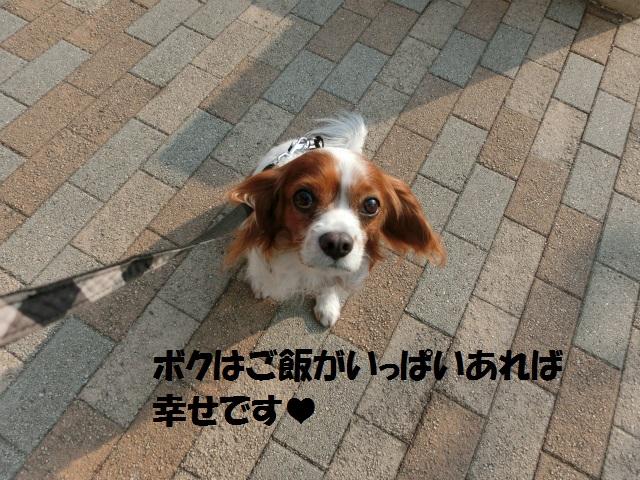 2013,12,08 まるちゃん イルミネーション 016