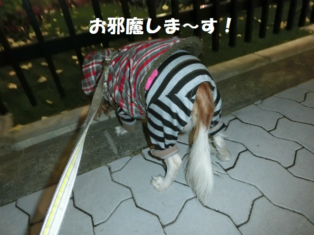 2013,12,08 まるちゃん イルミネーション 038
