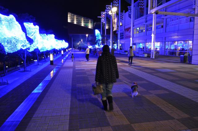 2013,12,08 まるちゃん イルミネーション 222