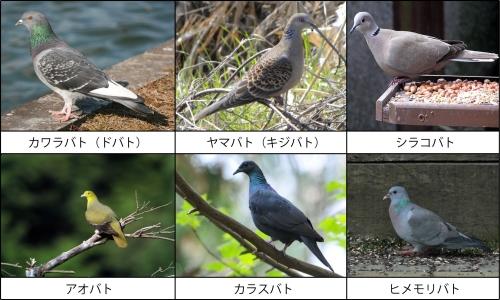 鳥害対策ブログ 2013年03月