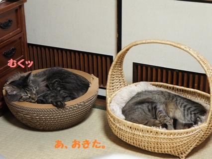 1_20120818182649.jpg