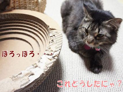 1_20121112003649.jpg