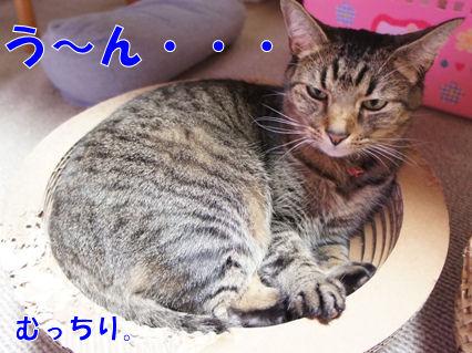1_20121115233010.jpg