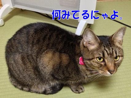 1_20121120231844.jpg
