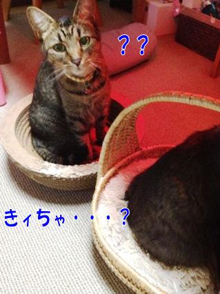 1_20121123002351.jpg