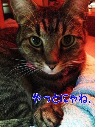 1_20121217201105.jpg