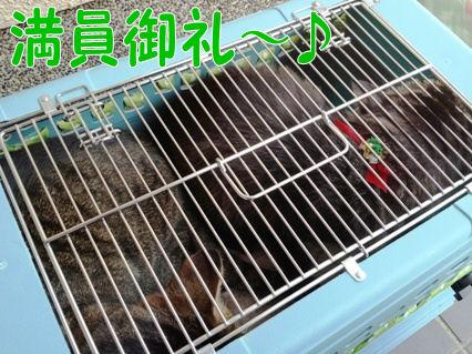 1_20121220220801.jpg