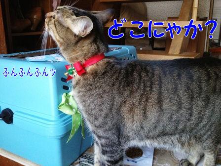 1_20121221232714.jpg