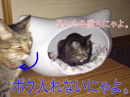 2_20121101215950.jpg