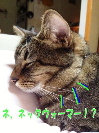 2_20121121222913.jpg