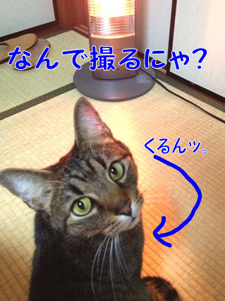 2_20130117001000.jpg